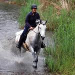 Pferdetraining im Wasser