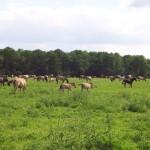 Lebewesen Pferd: Leben in der Herde mit Sozialkontakt, Bewegung und ausreichendem Futter